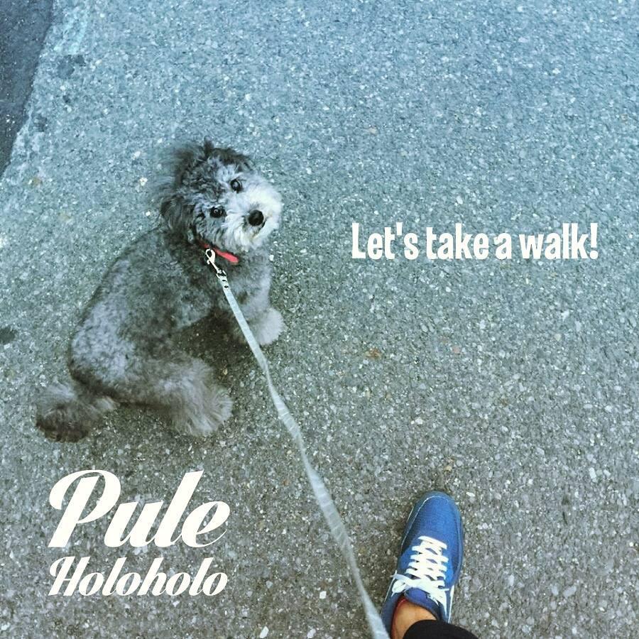 Pule_Holoholo